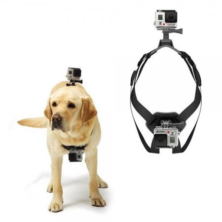 hunde halterung f r alle gopro action kameras. Black Bedroom Furniture Sets. Home Design Ideas